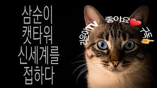 길 고양이 삼순 캣타원 신세계