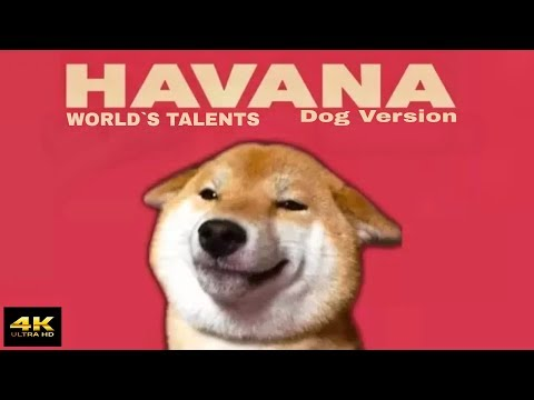 Dog Version: Havana song | Dog Music Cover [4K]
