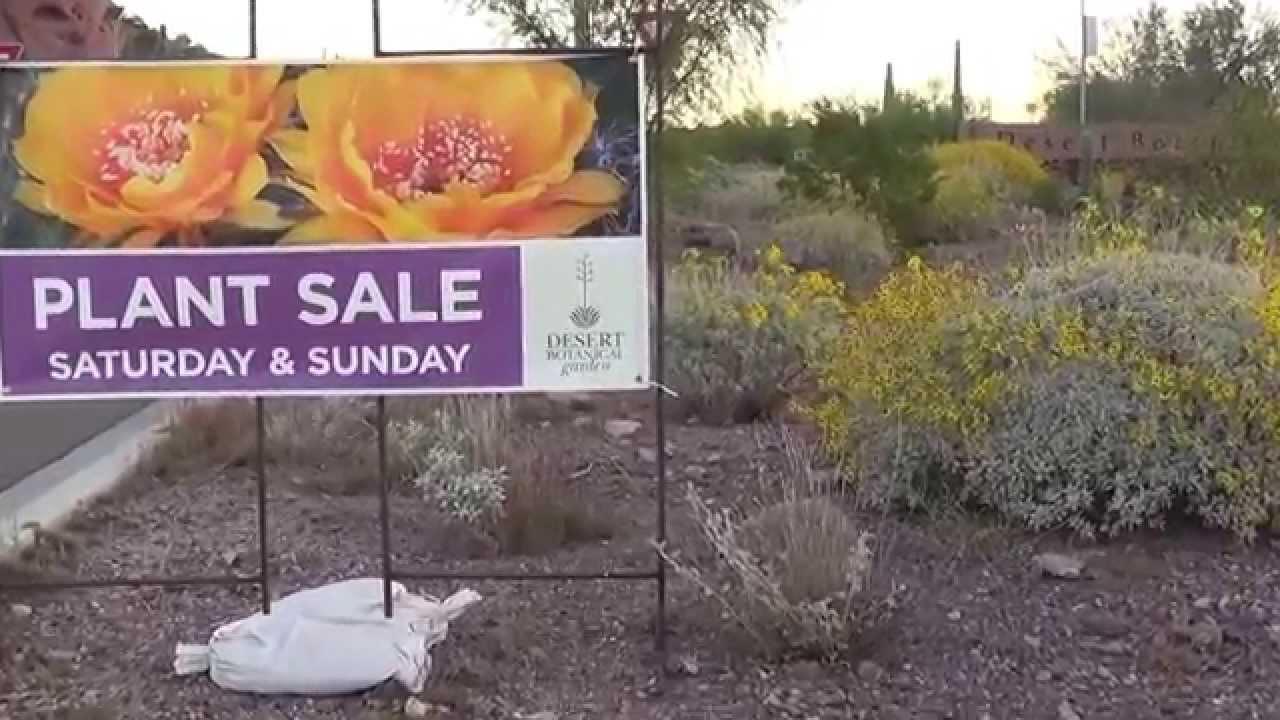 Desert Botanical Garden Spring Sale Delivery Sneak Peek Youtube
