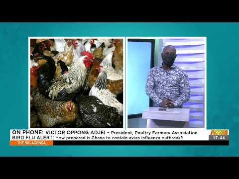 Bird Flu Alert: How prepared is Ghana to contain avian influenza outbreak? - The Big Agenda (5-8-21)