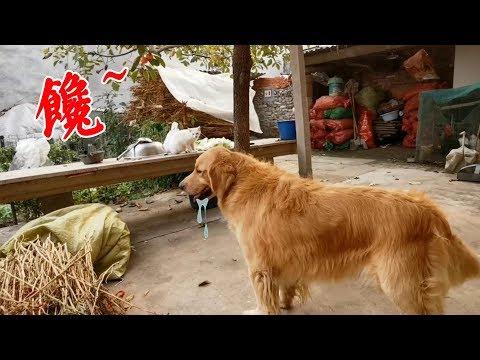 奶奶給狗狗煮地瓜,狗狗在一旁靜靜等待,口水止不住的往下流,太逗了【我是趙姐】