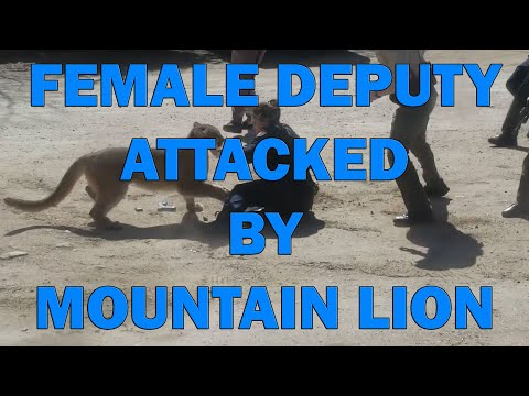 Female Deputy Attacked By Mountain Lion On Video - LEO Round Table 2020 S05E11c