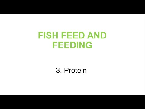 Fish Feeds And Feeding For Aquaculture #3. Protein