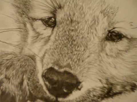 PENCIL DRAWING OF A WOLF PUP - YouTube
