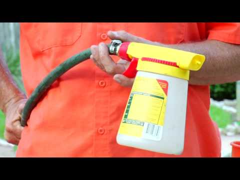Lawn & Gardening Tips : How to Get Rid of Fleas in Your ...