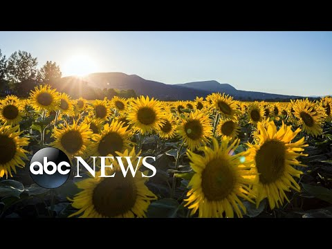 Sunflowers, panda and Breonna Taylor: World in Photos, July 6