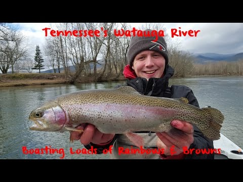 Tennessee's Watauga River Trout Fishing