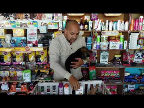 Pet Care - Dog Tick and Flies Problem - Bhola Shola