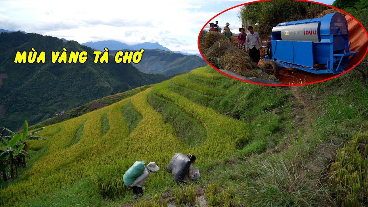 Mùa Vàng trên đỉnh Tà Chơ - Máy Tuốt lúa hoạt động hiệu quả ngày gặt đầu tiên nhà A Súa trưởng bản