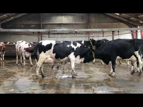 Intelligent Technology Modern Cow Milking Automatic Machine Hay Silo Feeding Tractor Smart Farming