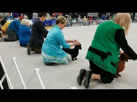 Dog Show: Dachshund Club of St Louis at Purina