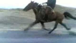 Лошадь Белокана 80 км/ч