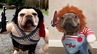 Cute Funny and Smart Pets Compilation Ep 02 - Pets House Video 2020