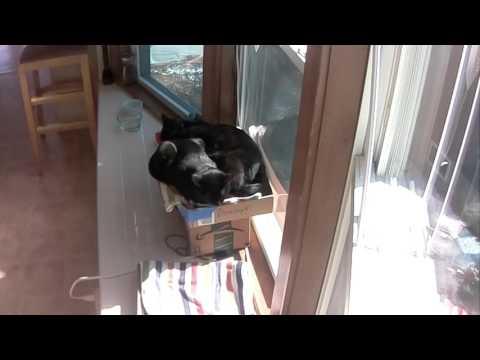 Cats sleeping in the window