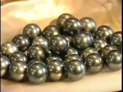 Introduction To Pearls And Australian Pearl Divers