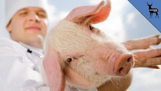 New Medical Use for Pig Skin