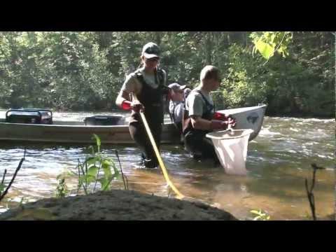 Biological Monitoring-Fish Sampling