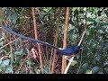Hari Mikat Murai Di Hutan  Mp3 - Mp4 Download