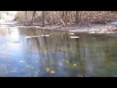 Pond Care Lawn Care Landscape Care Clear Spring MD Washington County MD