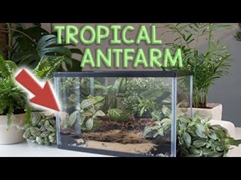 HOW TO BUILD A TROPICAL ANT FARM | Creating an Exotic Formicarium