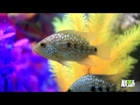 This Designer Fish Tank Has An Automatic Feeder! | Tanked