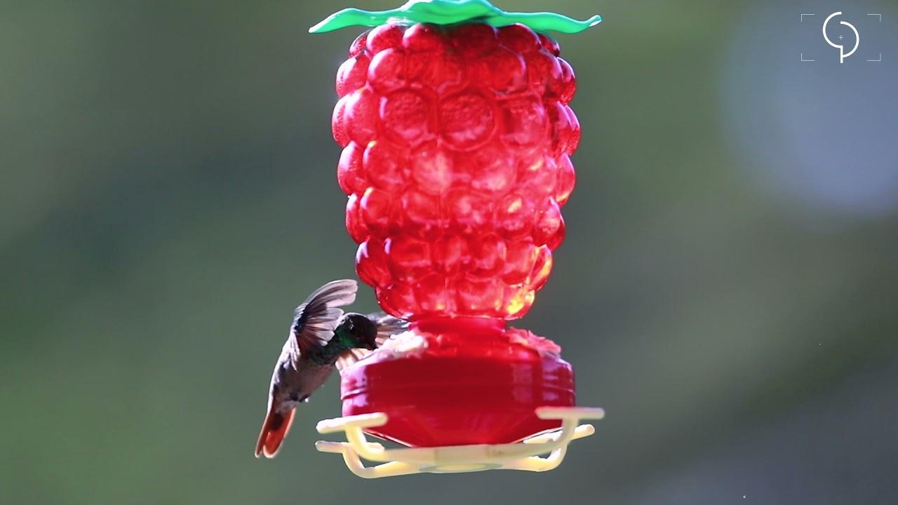 MINUTO COPAL. El baile de un colibrí