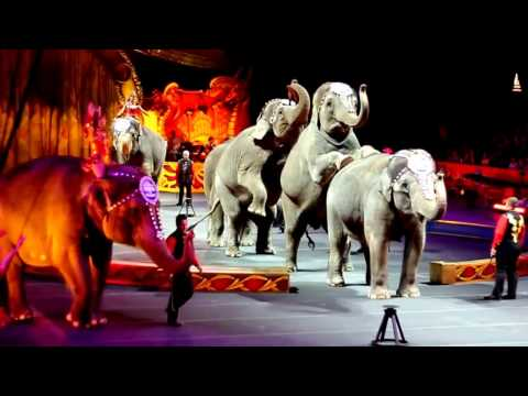Best Circus in The World