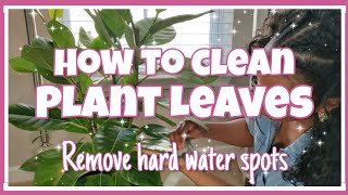 How to Clean Houseplant🌿 Leaves, Removing Hard Water Spots💦, DIY Plant Cleaner|| Kreatyve Laydiiee