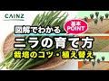 カインズ野菜図鑑 ニラの育て方 の動画、YouTube動画。