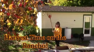 Harvest Time on the Rancho!...How Sweet It Is!