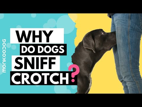 Why do Dogs Sniff your Private Parts or your Crotch? Discover the reason WHY? || Monkoodog