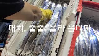 통영 갈치전문선사 구디호 철수조황