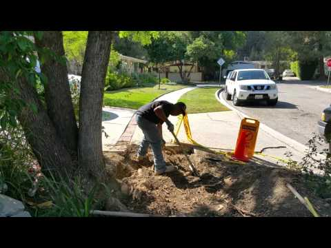 How to remove tree roots below your concrete slab before you pour concrete in LA by Shafran
