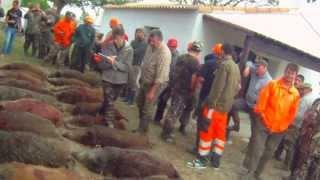 trés beau tableau de chasse de sanglier en camargue JLF 2013