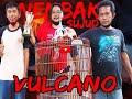 Satria Cup Kestabilan Murai Batu Vulcano Makin Terlihat  Mp3 - Mp4 Download