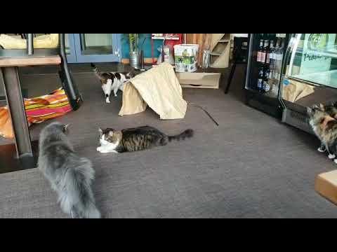 Cats Cafe Karlsruhe