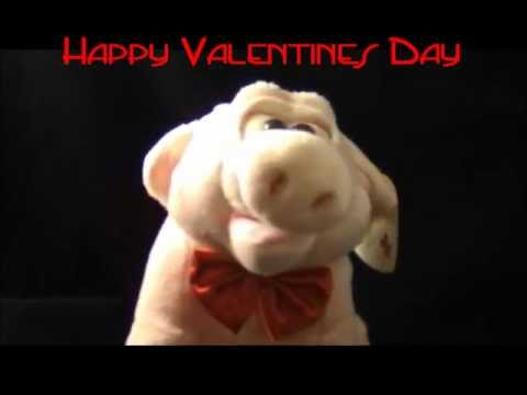 Happy Valentines Day I Got You Babe Singing Pig .wmv   YouTube