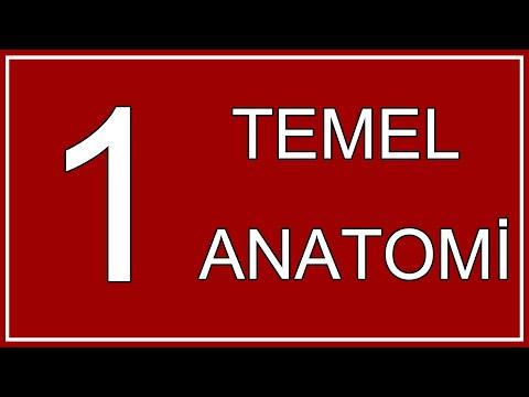 1#Anatomi'de Düzlemler,Yön Bildiren Terimler,Vücuttaki Boşluklar