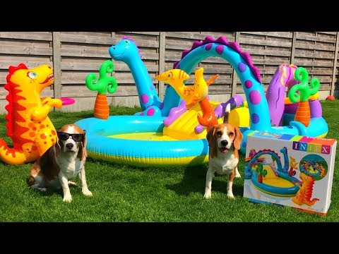 Dogs get an Intex Inflatable Play Center : HATE IT!! Cute Dogs Louie & Marie