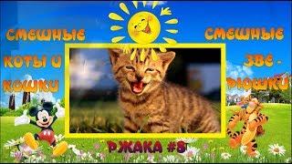 Ржака #8. Смешные попугаи. Дружба попугая с котом