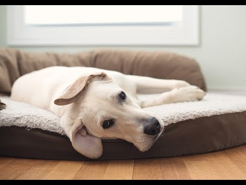 how-to-wash-a-dog-bed
