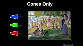 Color Vision 4: Cones to See Color