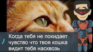 Когда тебя не покидает чувство когда твоя кошка видит тебя на сквозь