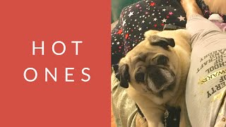 Hot Ones -The Opinionated Pug