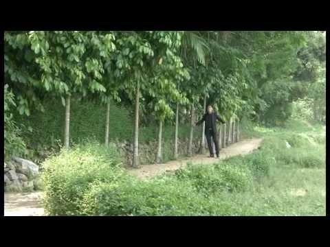 Tiên Phước  xanh ngát vườn quê