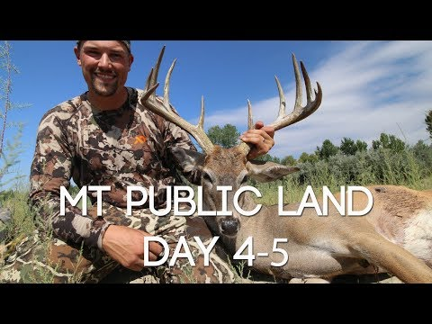 Day 4-5 PUBLIC LAND MONTANA DEER - SUCCESS! - #WiredToHuntWeekly 60