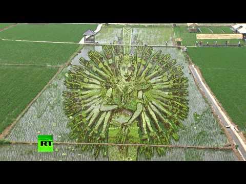 Фермеры Шэньяна украсили рисовые поля масштабными 3D-рисунками