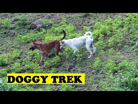 Two Friends Trek Down Hill To Tracks Panch Pipila
