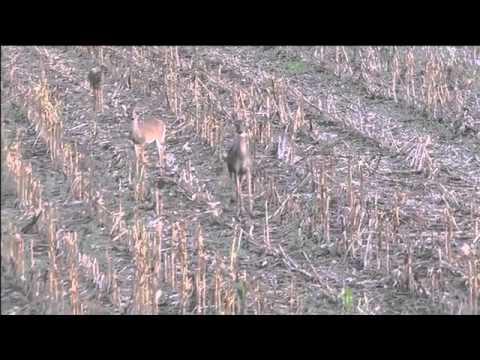 Marion Kansas Disabled Hunt