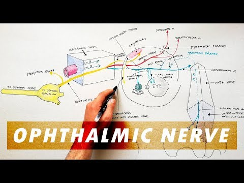 Cranial nerve 5 exam: How to assess theCranial nerve 5 exam: How to assess thetrigeminalCranial nerv.